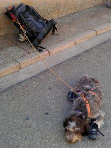 Camino-santiago-perro