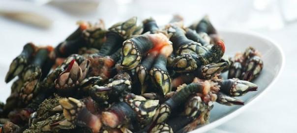 Percebe-gastronomía-gallega