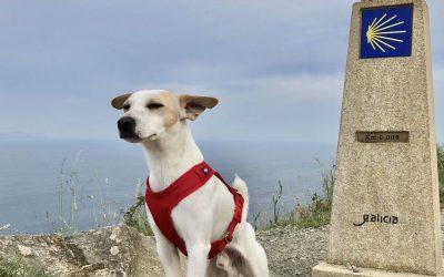 ¡El Camino de Santiago con perro, es posible!